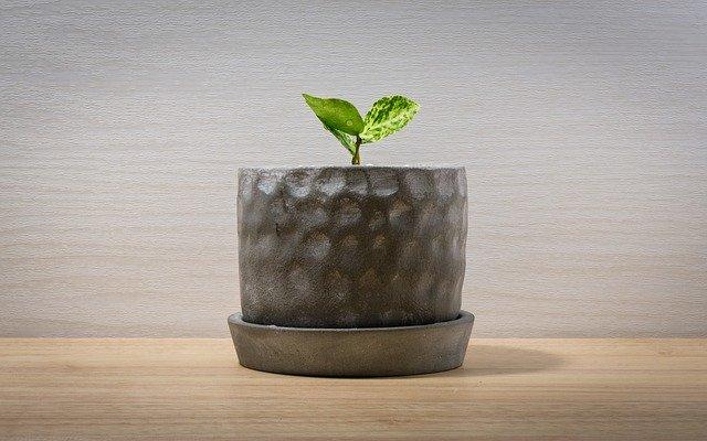 初心者を表す植物の芽